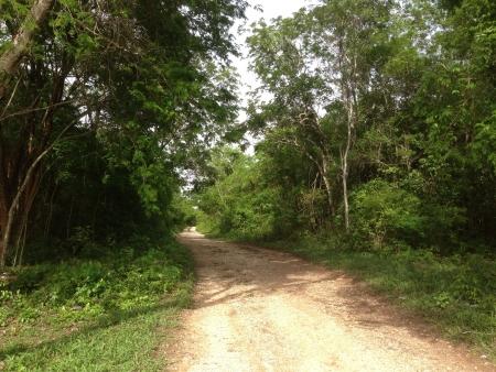 chan: A rural path at Chan San Antonio Tizimin Yucatn Mxico  Stock Photo