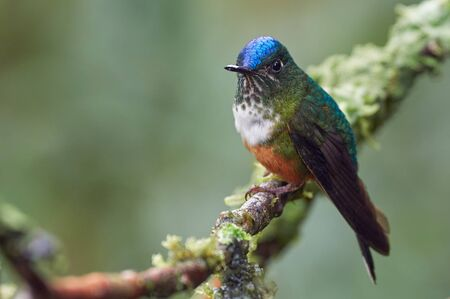 Colorful hummingbird resting on a branch with moss
