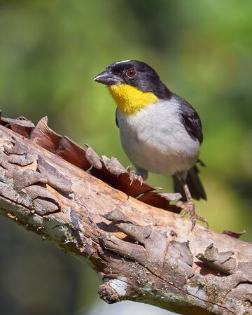 Black and yellow bird perched on a dry tree