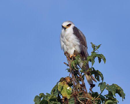 Bird of prey resting on a tree quietly Archivio Fotografico