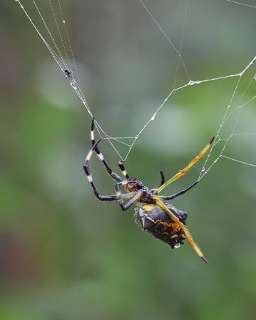 Spider catching his dinner in the spider´s web