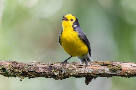 Bird on a branch resting