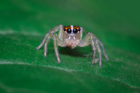Curious spider perched on a green leaf