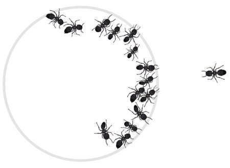 trapped: A group of ants trapped in a circle with one seperated. General concept for many things.  Illustration