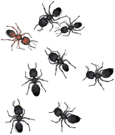 curiously: A group of worker ants noticing a different species of worker ant and inspecting him curiously.