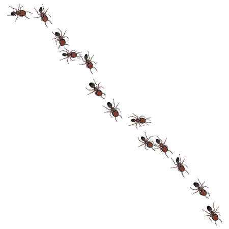A line of worker ants marching to some destination. Vector