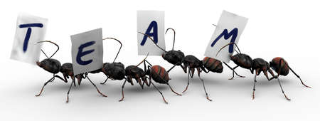 Four ants carrying fragments of paper, each with a letter that spells the word team. Good concepts for organized efforts.  photo