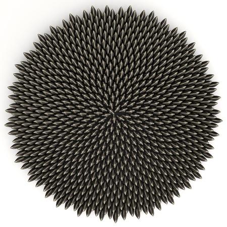 semillas de girasol: Las semillas de girasol ordenados de acuerdo al ángulo de oro por la colocación asistida por ordenador - una precisión de 10 dígitos. Hay 800 de ellos. Foto de archivo