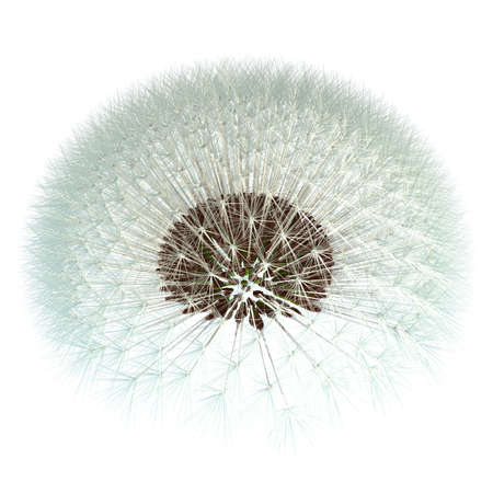 Dandelion seeds ready to take to the wind! 3d render based on experimentation with the golden ratio Fibonacci sequence. Isn't nature inspiring? Stock Photo - 13117214