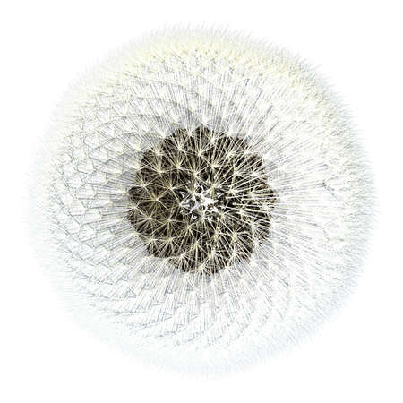 Viewed from the top, dandelion seeds with the sphere of puffy flying things that everyone loves so much. 3d generated, experiments in Golden Ratio mathematics.