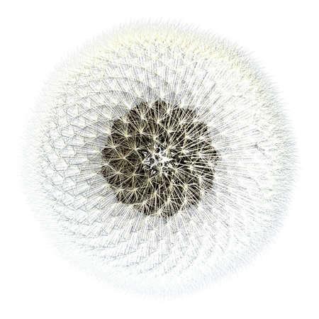 espiral: Visto desde la parte superior, las semillas de diente de le�n con la esfera de las cosas que vuelan hinchados que todo el mundo ama tanto. 3d generado, experimentos en matem�ticas proporci�n �urea. Foto de archivo