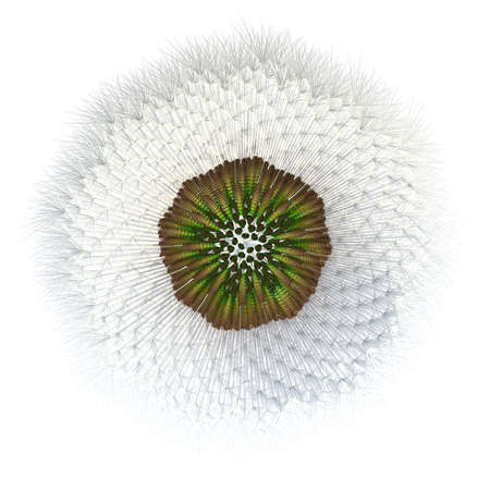 3d generated dandelion seeds, with hair particles acting as the wind catchers distinctive of dandelion seeds. Experiment with golden ratio and point generation applied to a dandelion. photo