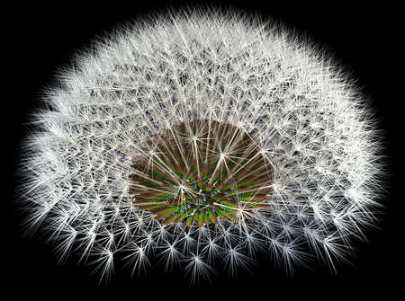Dandelion seeds, 3d generated, black background. Fibonacci sequence and golden ratio experiments. Stock Photo