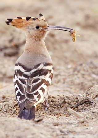 insectivorous: Insectivorous bird bait Stock Photo