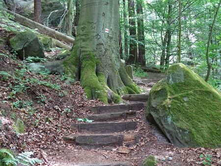 Trail with many steps in the Saxon Switzerland.