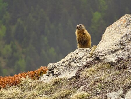 Marmots are not rarely to see whili hiking. This beautiful one is being on sentry duty.