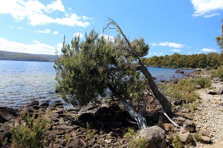 Tasmania, Lake St. Clair in Cradle Mountain-Lake St Clair National Park Zdjęcie Seryjne