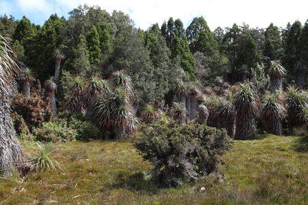 Australia, Cradle Mountain, Lake St Clair National Park Tasmania