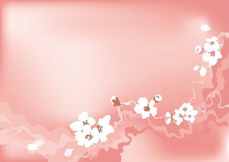 Cherry flower, pink background