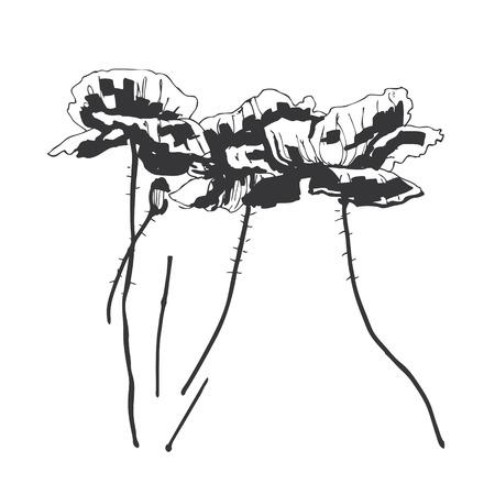 Poppy flower, pen and marker Vector