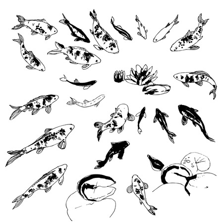 poisson koi: Noir et blanc main-dessin koi poissons collection Illustration
