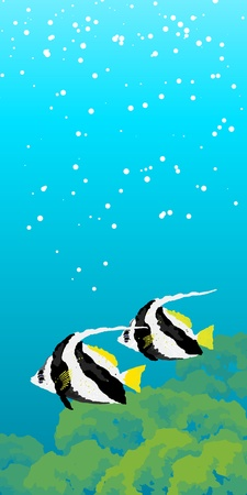 moorish idol: Two striped Moorish idol fishes floating under water  Vertical banner