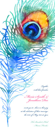 exotic birds: Elegant vector background for wedding invitation with watercolor peacock feather
