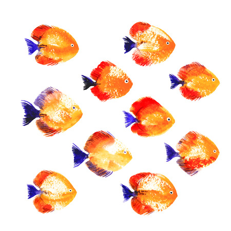 symphysodon: Collection of red vector watercolor discus fish Illustration