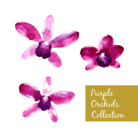 crimson: Collection of beautiful purple vector watercolor orchids Illustration