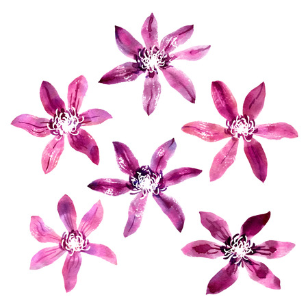 Collection of violet and purple watercolor clematis Vector