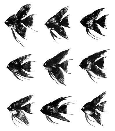 pterophyllum: Collection of vector watercolor black angelfish Illustration