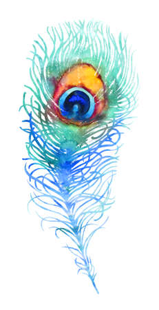 peacock: Elegant vector watercolor peacock feather, blue and orange