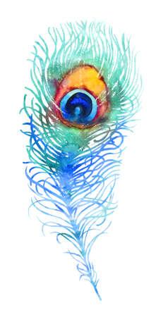 pluma de pavo real: Elegante vector de pavo real acuarela pluma, azul y naranja Vectores