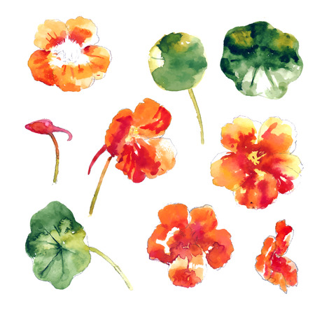 groundcover: Set of orange watercolor nasturtium flowers and leaves