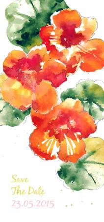 nasturtium: Vector background with orange watercolor nasturtium for wedding invitation or flyer