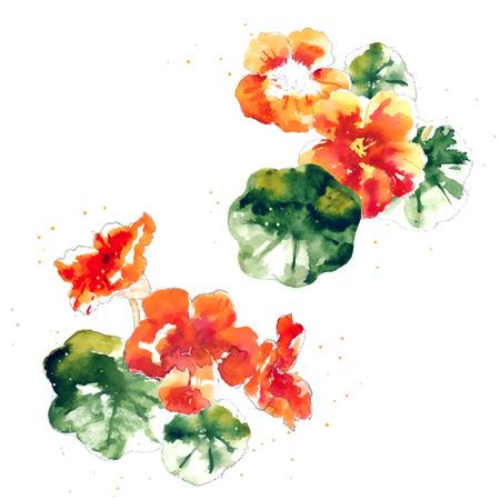 flower painting: Set of orange watercolor nasturtium flowers and leaves