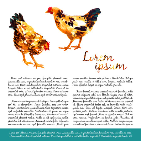 hen  farm: Design template with orange-red watercolor hens and roosters