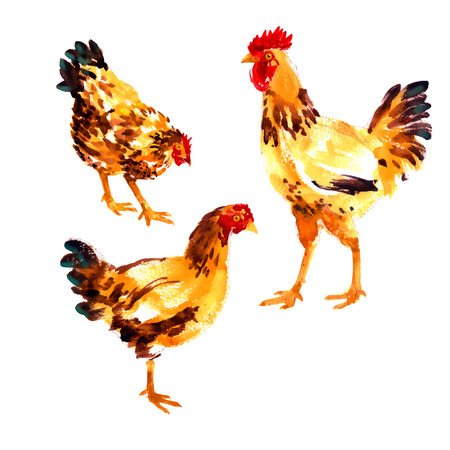 animal cock: Collection with orange-red watercolor hens and roosters