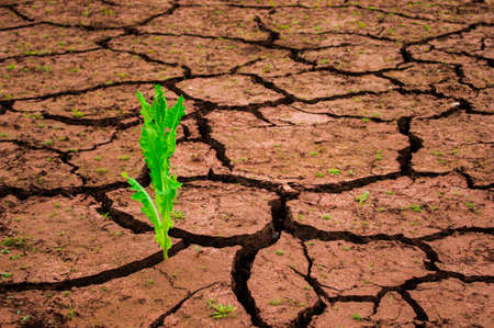 colorized: Green plant growing out of cracks in the earth Stock Photo