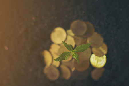 Marijuana plant growing in piles of money . Marijuana business concept. Reklamní fotografie