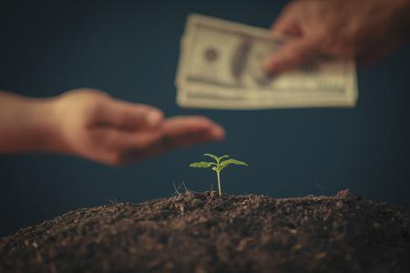 Marijuana business concept. Cannabis leaf and Dollar banknotes.