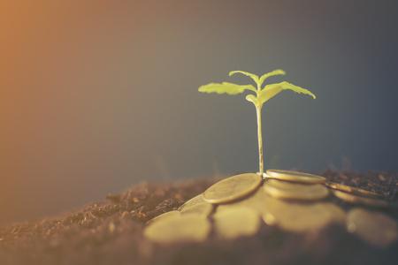 Marijuana plant growing in piles of money . Marijuana business concept. 免版税图像