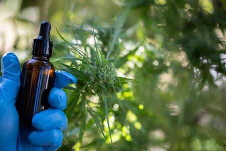 Cannabis CBD oil hemp products cannabis oil, CBD oil cannabis extract, Medical cannabis concept.