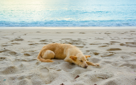 a dog is on the beach with beautiful view Stock Photo
