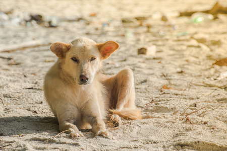 sand watch: a dog is on the beach with beautiful view Stock Photo