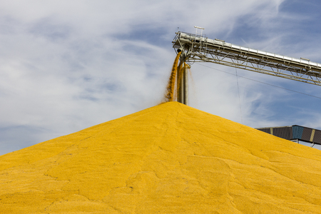 Corn and Grain Handling or Harvesting Terminal. Corn Can be Used for Food, Feed or Ethanol III