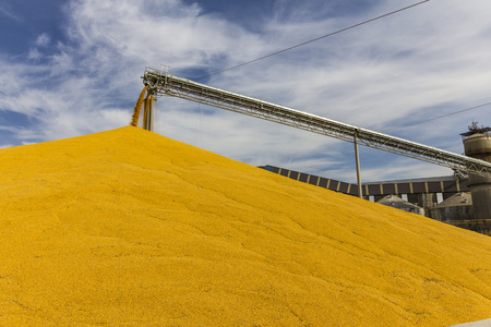 Corn and Grain Handling or Harvesting Terminal. Corn Can be Used for Food, Feed or Ethanol II Stock Photo