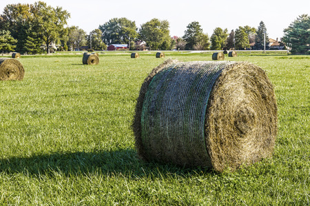 Late Summer hay bales in a green pasture and field I