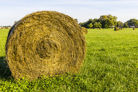 Late Summer hay bales in a green pasture and field II