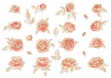 rosebuds: Collection of 16 hand-drawn pink roses